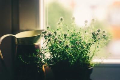 piante case